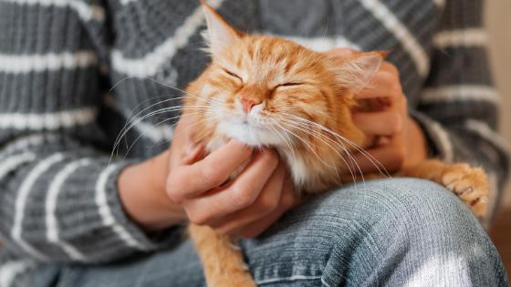猫を膝にのせている人